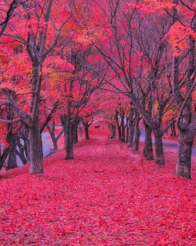 Japan Autumn Photo
