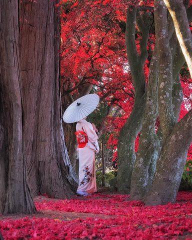 Japan Autumn Trip