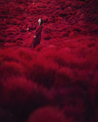 Hitachi Seaside Park Autumn red